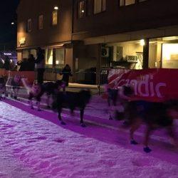 Marit Beate Kasin Finnmarksløpet 1000 2017 team vinterdans kirkenes