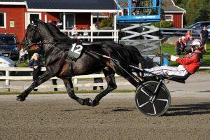 Hestens dag – Familiefest på Kala Travpark