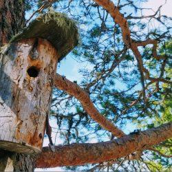 Fuglekasse fugleholk holk 4-h fuglerede natur furutre foto roy myrland fuglekassene