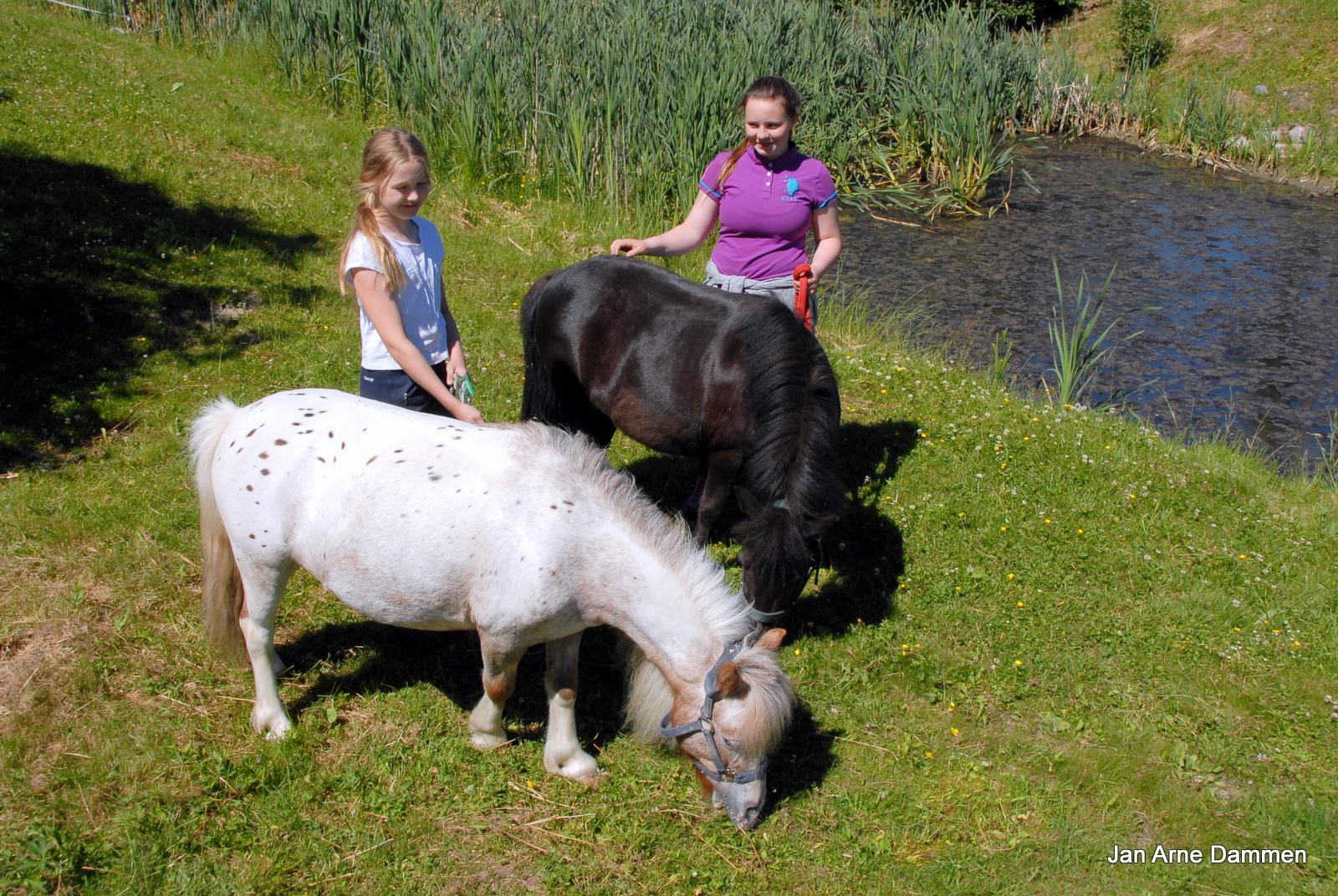 Pepsi og Rapunsel koser seg sammen med Øydis og Martine ved Drammen Ridesenter Foto Jan Arne Dammen.